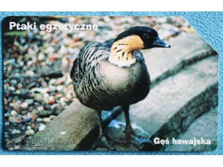 Ptaki Egzotyczne 8(10)