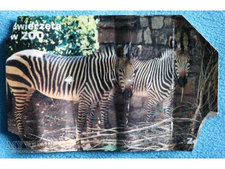Zwierzęta w ZOO 8 (10)