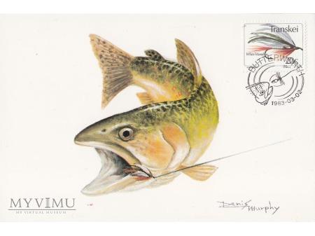 Transkei 1983 - pocztówki