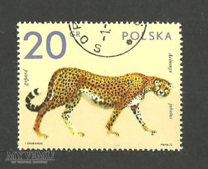 ZOO Gepard