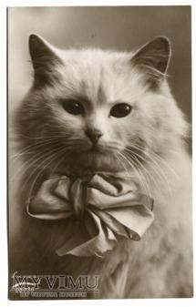 Koteczek z wielką kokardą - model niesłychany