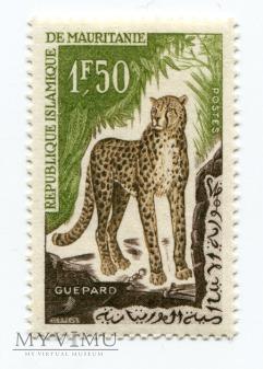 Gepard République Islamique de Mauritanie