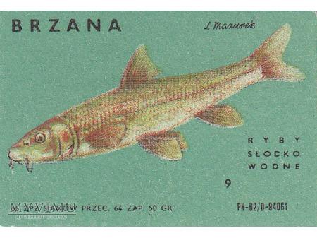 Etykiety z rybami słodkowodnymi (cz. 2)