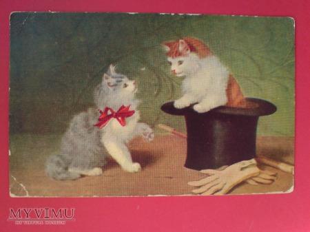 Kocie sztuczki kuglarki ;) Kociak i cylinder