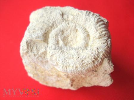 Amonit 23