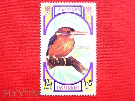 Ptak (4)