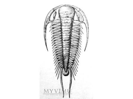 Trylobit