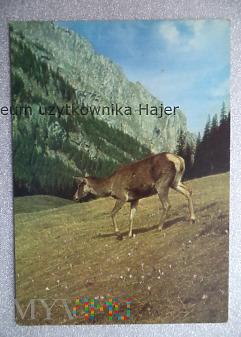 Duże zdjęcie TATRY ZACHODNIE Tatrzański Park Narodowy Dolina Ko