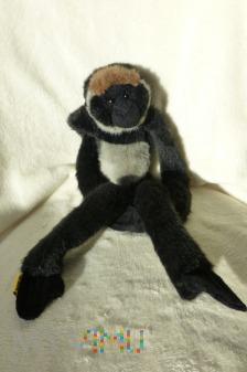 Maskotka pluszowa Gibbon ( Opica)