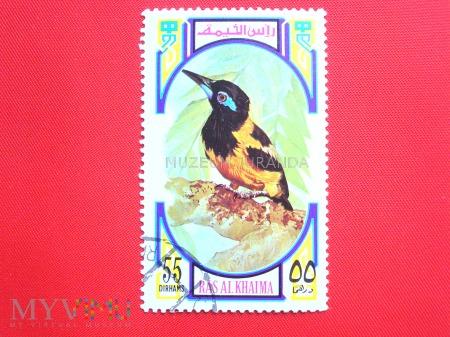 Ptak (2)