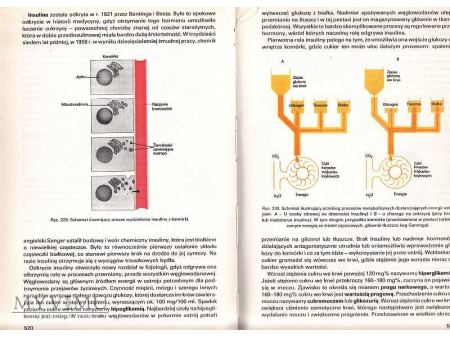 ANATOMIA I FIZJOLOGIA