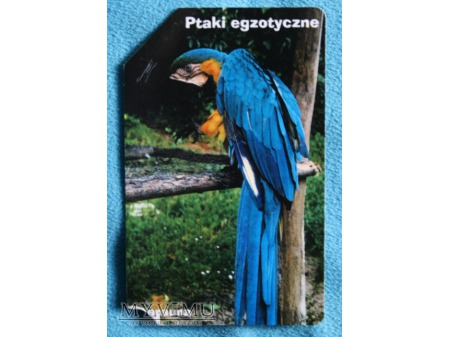 Ptaki Egzotyczne 10(10)