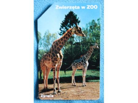 Zwierzęta w ZOO 10 (10)