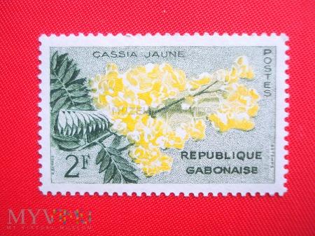 Duże zdjęcie Cassia jaune