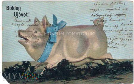 Świnka Noworoczna - 1905