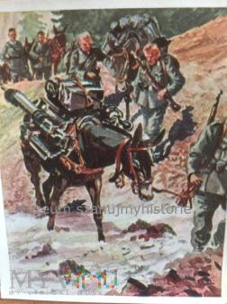 transport broni na mułach