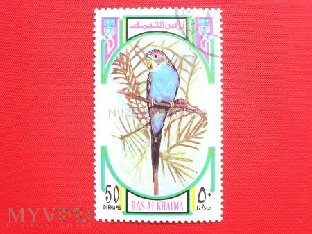 Ptak - papuga falista