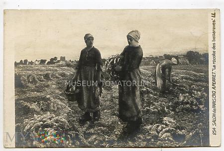 Perret - Zbiory buraków - 1910