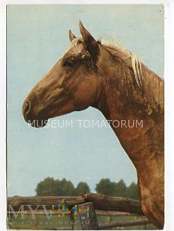 Konie - Posadowo - Stadnina