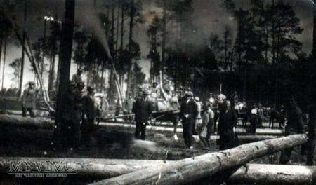 Prace w lesie