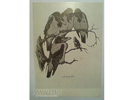Kruki JURY Ptaki ZSRR 1957 Ptaki Litwinienko