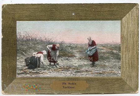 Sadee - Pokłosie - 1906