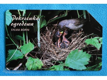 Duże zdjęcie Zwierzęta chronione w Polsce (Ptaki)