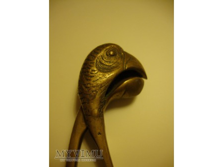 Głowa papugi Dziadek do orzechów