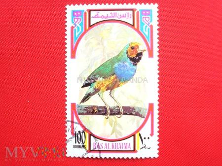 Ptak (3)
