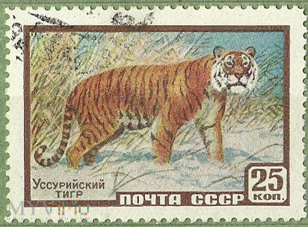 Yссурийский тигр