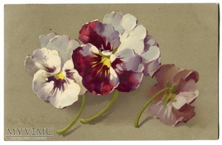 c. 1910 Catharina C. Klein Bratki Stiefmütterchen