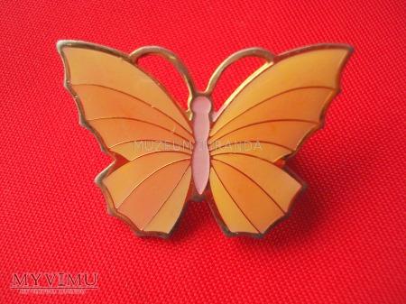 Duże zdjęcie Broszka - motyl