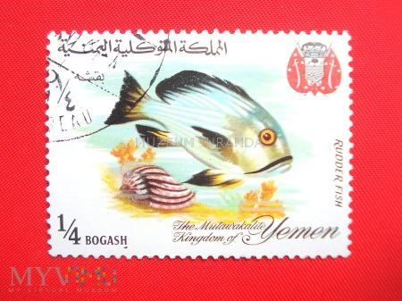 Ryby raf koralowych (1)