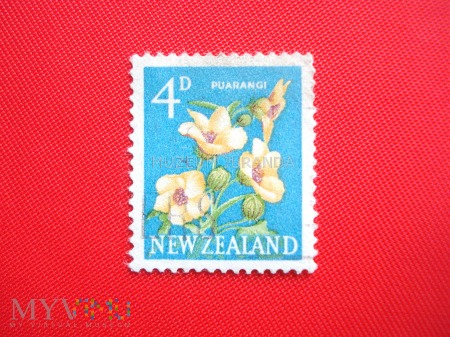 Duże zdjęcie Ketmia południowa (Trionum hibiscus)