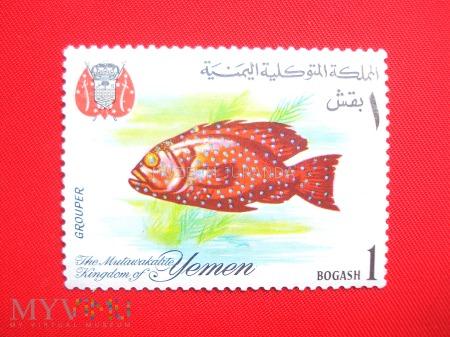 Ryby raf koralowych (2)