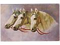 Zobacz kolekcję Koń w sztuce
