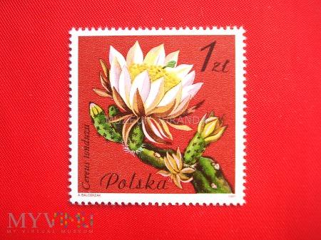 Cereus tonduzis