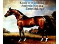 Konie w twórczości Andrzeja Novaka