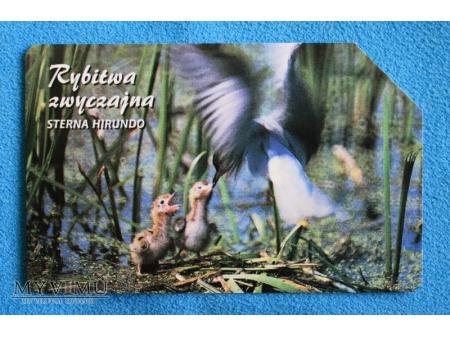 Zwierzęta chronione w Polsce (Ptaki)