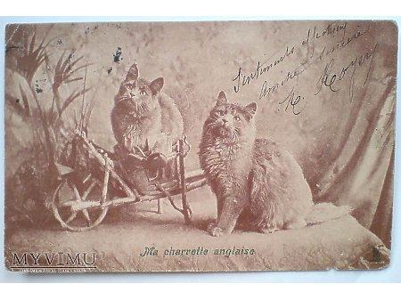 1904 KOTKI - Mój wózek angielski - kocie cudaki