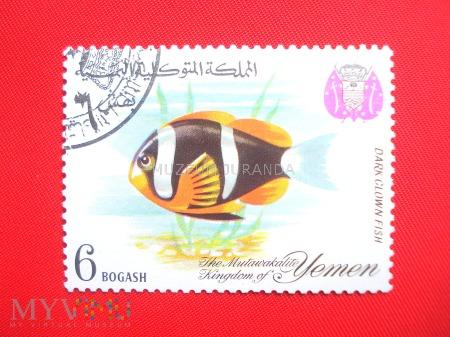 Ryby raf koralowych (4)