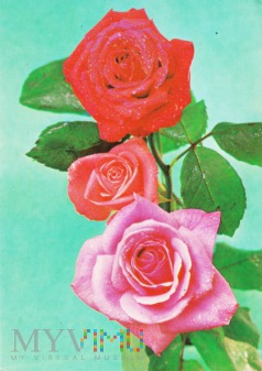 Duże zdjęcie Róże
