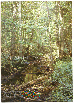 Białowieża - rezerwat Przyrody - 1981