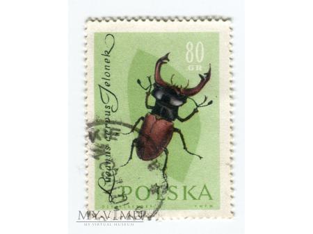 1961 chrząszcz jelonek rogacz znaczek Polska
