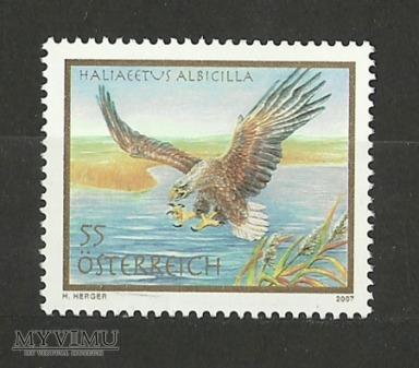 Haliaeetus albicilla