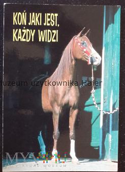Koń jaki jest , każdy widzi