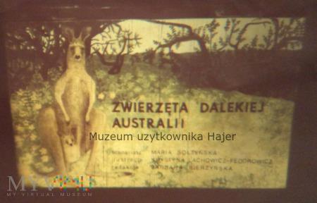 Zwierzęta egzotyczne Zwierzęta dalekiej Australii