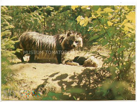 Białowieża - rezerwat Przyrody - Jenot - 1981