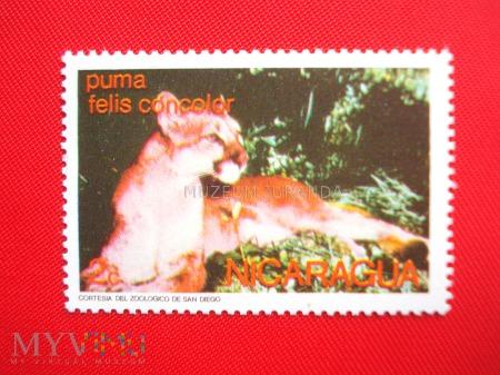 Duże zdjęcie Puma
