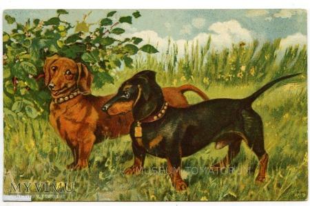 Dachshund - Jamnik - psie zaloty - 1943